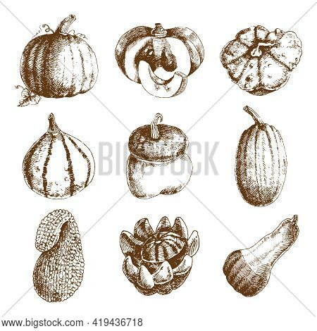 Decorative Unusual Pumpkins Varieties And Winter Squash Icons Collection Hand Drawn Doodle Style Abs
