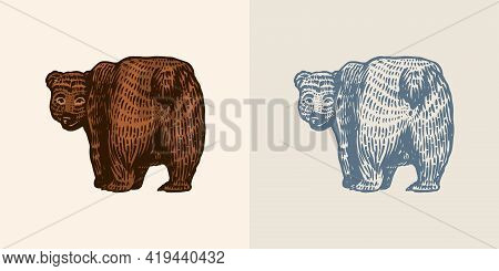 Grizzly Bear In Vintage Style. Brown Wild Animal. Side View. The Beast Looks Back. Hand Drawn Engrav