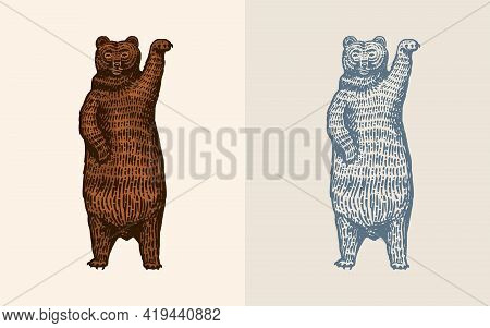 Grizzly Bear In Vintage Style. Brown Wild Animal. Dancing Beast. Hand Drawn Engraved Old Sketch For