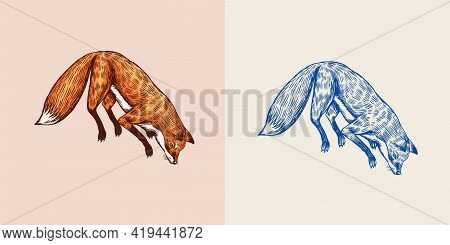 Soaring Fox. Wild Forest Red Animal Jumping Up. Food Search Concept. Vintage Style. Engraved Hand Dr