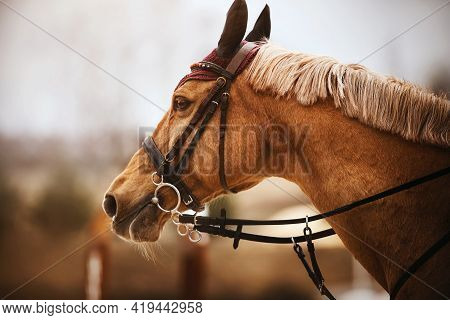 Portrait Of A Beautiful Sorrel Horse With A Light Mane And A Leather Bridle On Its Muzzle On A Cloud