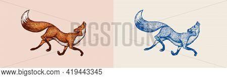 Red Fox Badge. Forest Ginger. Wild Animal. Vector Engraved Hand Drawn Vintage Old Sketch For Stamp,