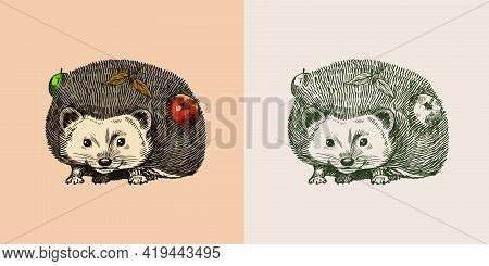 Hedgehog With Apples. Spiny Forest Animal. Prickly Creature. Vector Engraved Hand Drawn Vintage Sket
