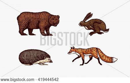 Forest Animals. Bear Grizzly And Red Fox, Hare And Hedgehog. Jumping Beasts. Vector Engraved Hand Dr