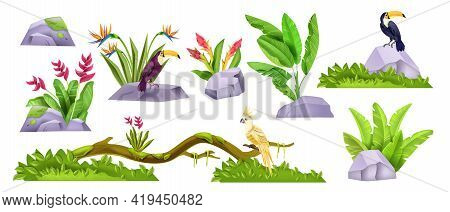 Jungle Stone Rocks, Tropical Vector Set, Exotic Green Plants, Parrot, Toucan, Exotic Flowers, Banana