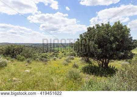 Nature Near The Excavations Of The Ancient Maresha City In Beit Guvrin, Near Kiryat Gat, In Israel