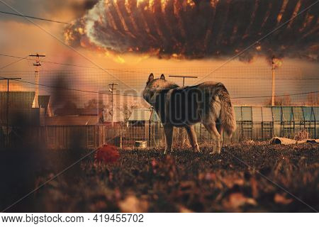 A Husky Dog Watches As A Ufo Invasion Takes Place In The Sky. Collage, Photo Art. Fire, Flames, Expl
