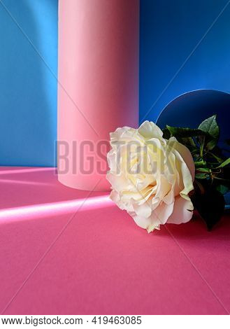 Bright Pink And Blue Colorful Background With White Rose. Minimalistic Summer Concept.