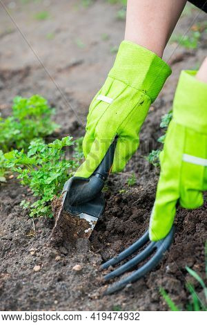 Closeup Image Of Woman With Spade Digging Soil In Garden