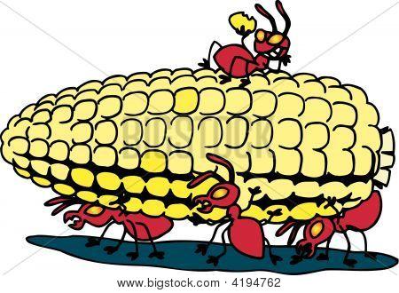 Ants And Corn