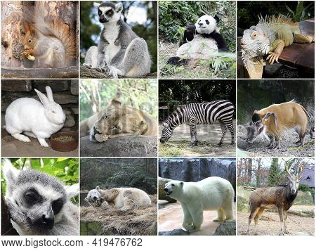 Collage Of Different Beautiful Cute Animals In Zoo