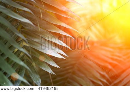 Tropical Leaves In The Jungle Background. Rainforest With Plants And Amazing Sunshine In The Morning