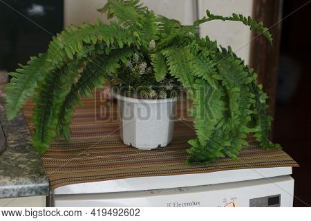 Ecology And Green Life In The City. In A City Apartment, A Green Plant