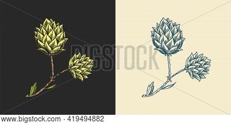 Hops And Barley. Malt Beer. Engraved Vintage Set. Hand Drawn Collection. Sketch For Web Or Pub Menu.