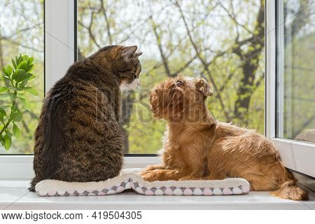 Cat And A Dog Sit Together On The Windowsill