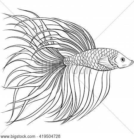 Betta Fish Or Siamese Fighter Fish Side View In Simple Hand Drawn Line Art Style. Decorative Goldfis