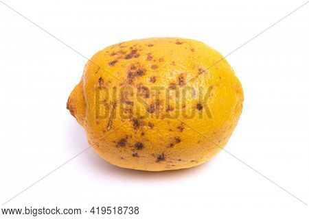 Spoiled overroten lemon with mouldish dots isolated over white background