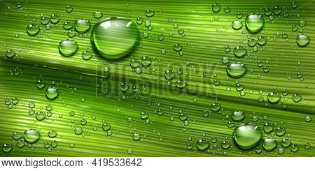 Tree Leaf Texture With Water Drops, Palm Or Banana Green Plant With Pure Shining Dew Droplets Abstra