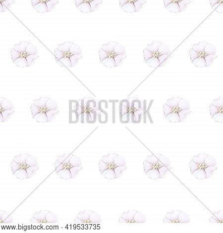 Seamless Pattern. Spring Delicate Flowers. Digital Printing