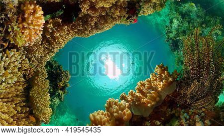 Beautiful Underwater Landscape With Tropical Fishes And Corals. Life Coral Reef. Philippines.