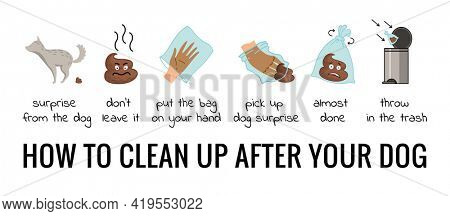 Dog poo clean up steps infographic set.  poster about hygiene animal, toilet cleaning information after your dog. Pick up poo after pets, picking waste in canine bag and throw in the trash