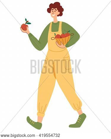 Agricultural Man With Baskets Full Of Apples. Young Man Carrying Wicker Basket Full With Gathered Ap