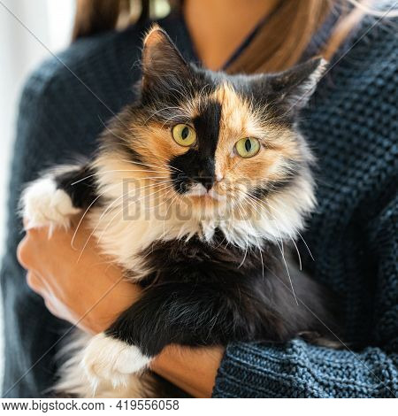 Woman Are Holding Beautiful Three-color Orange-black-and-white Young Cat In Her Hands.