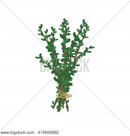 A Bunch Of Herbs Tied With A Rope With A Bow. Ingredient And Seasoning Thyme Or Oregano For Cooking.