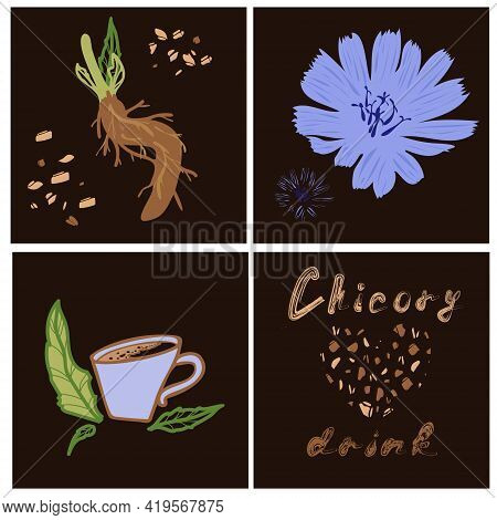 Print Design Set Of Square Cards With Chicory Flower, Granules, Root, Lettering And Drink Cup