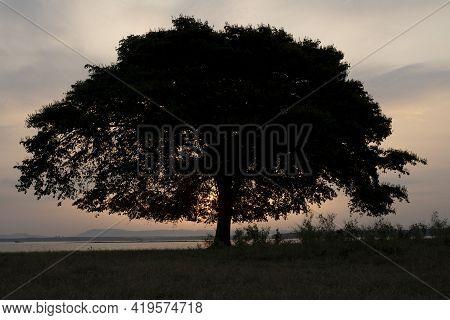 Big Tree Silhouette, Dark Trees In Dawn During The Sunrise.