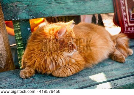 Street Ginger Cat Lying Down On Wooden Bench Outdoors In Sunny Day.