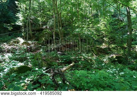 Wood That Decomposes Due To Moisture And Is Attacked By Fungi