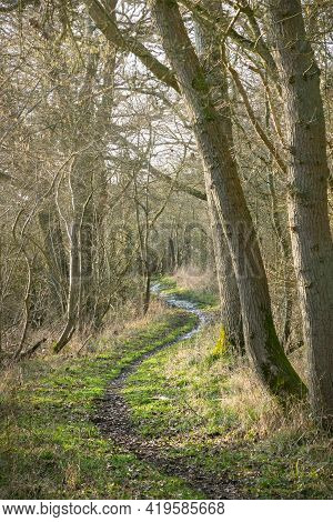 Woodland Trail Or Path. Tree Lined Footpath Through Deciduous Forest In Winter, Buckinghamshire, Uk