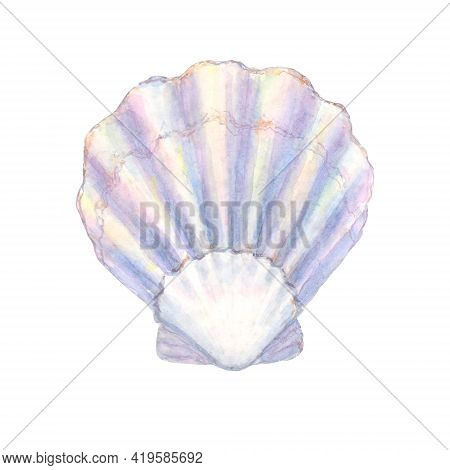 Seashell Watercolor Illustration. Watercolour Hand Drawn Sea Shell Isolated On White Background. Mar