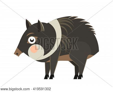 Cute Cartoon Collared Peccary In Flat Style. South America Animal For Abc Book. Vector Illustration