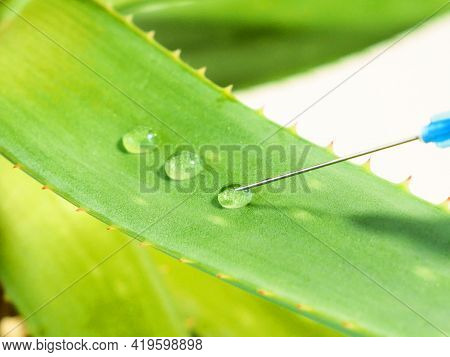 Aloe Vera Plant And Syringe, Using The Aloe Vera Plant For The Production Of Medicines And Cosmetics