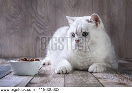 A White British Cat And Bowl Of Food, A White British Cat Sits On The Floor Next To His Bowl Of Food
