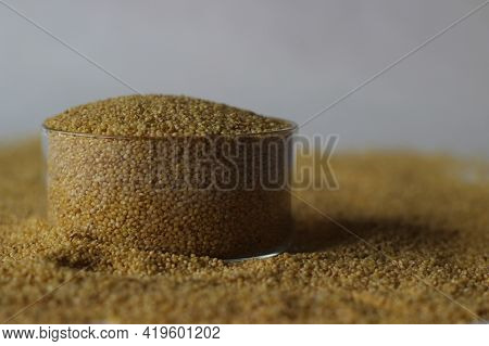 Foxtail Millet, Scientific Name Setaria Italica, Is An Annual Grass Grown For Human Food.