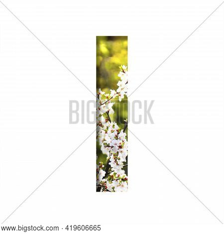 Spring Sunny Font. The Letter I Cut Out Of Paper On The Background Of Blooming Cherry On A Sunny Spr