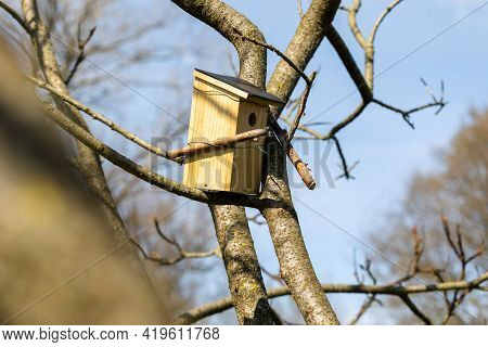 A Rectangular Shaped Birdhouse Standing On A Branch Of A Leafless Tree In A Garden On A Sunny Day. T