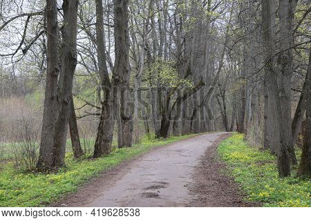 Alley In The Park Among The Trunks Of Old Tall Trees, Moscow Region, Sukhanovo, May, 2021