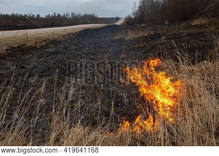 A Strong Forest Fire Breaks Out In Windy Weather Due To Human Fault, Flames Destroy Dry Grass On The