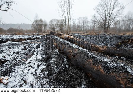 Ash And Snow Lie On The Black Charred Ground After A Forest Fire, A Natural Disaster And Environment