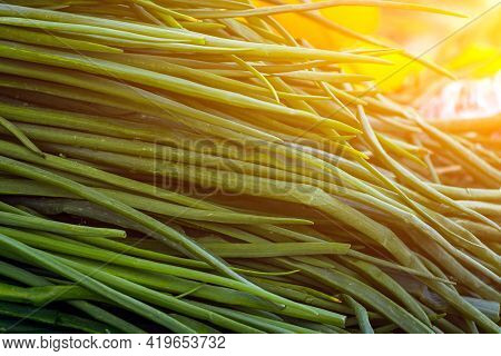 Close Up Of Green Plant For Background, Green Onion Texture Or Background. Green Leaves Form A Natur