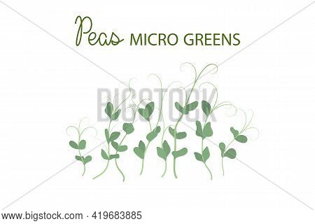 Hand Drawn Peas Microgreens. Healthy Food. Pea Sprouts With Green Leaves Isolated On White Backgroun