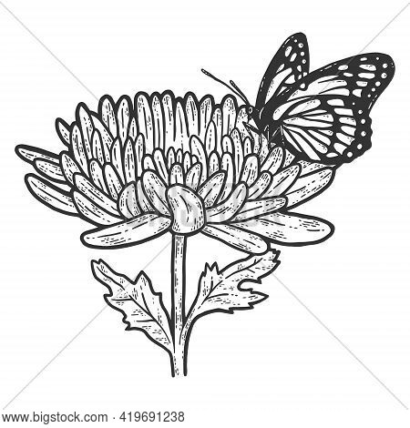 Monarch Butterfly On Chrysanthemum. Sketch Scratch Board Imitation.