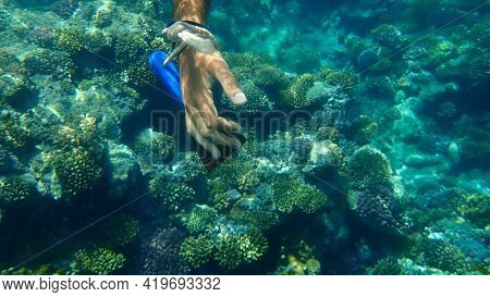 The Hand Of The Criminal, Who Wanted To Cut The Coral With A Sharp Spatula Undersea. Result: The Pho