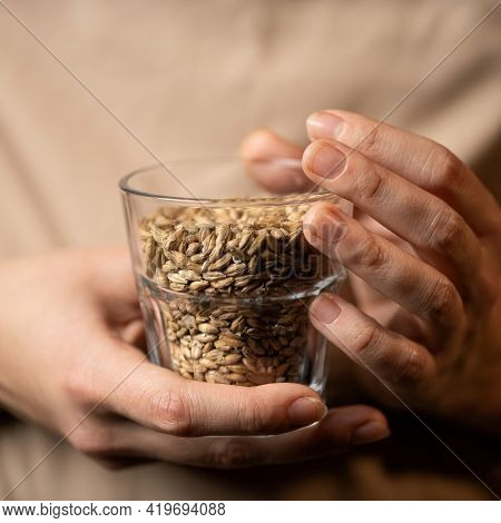 Wheat Grains In Glassware. Caucasian Female Hands Holding Glass With Wheat Grains. Close Up Shot, So