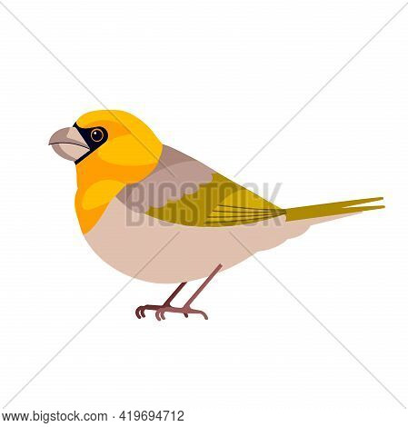 Rarest Birds In The World. Palila Is A Critically Endangered Finch-billed Species Of Rare Hawaiian H