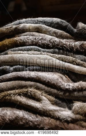 Raw Salted Cow Skins Are Piled Up. Leather Dressing.
